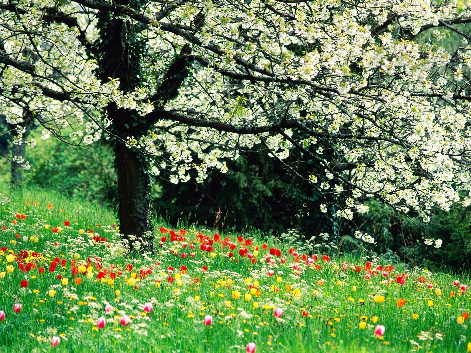Spring Flowers HD dekstop wallpapers   Beautiful Spring Flowers 1600x1200