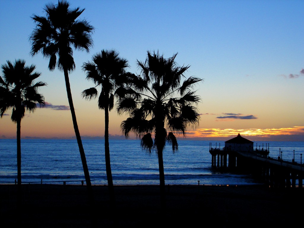 California Palm Trees Beach California Beaches Palm Trees 1024x768