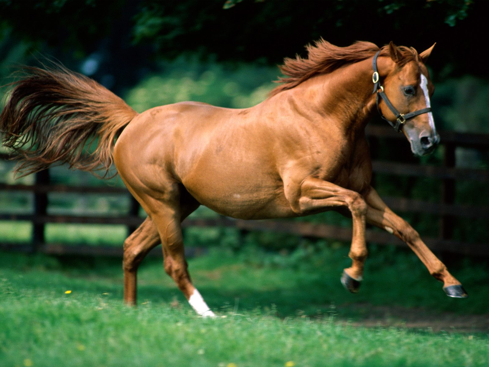 Free Download The Cat Running Horses Wallpapers For Desktop