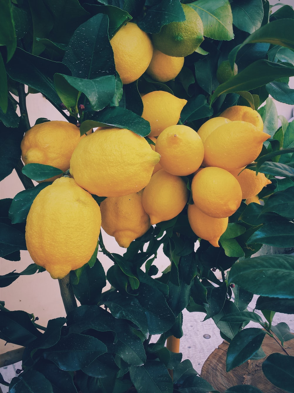 Free Download 750 Lemon Pictures Hd Download Images Stock Photos