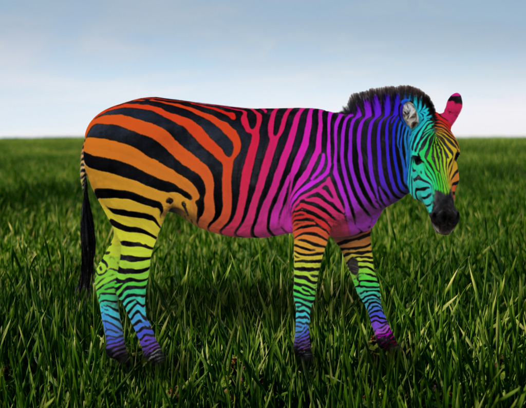 rainbow zebra wallpaper wallpapersafari. Black Bedroom Furniture Sets. Home Design Ideas
