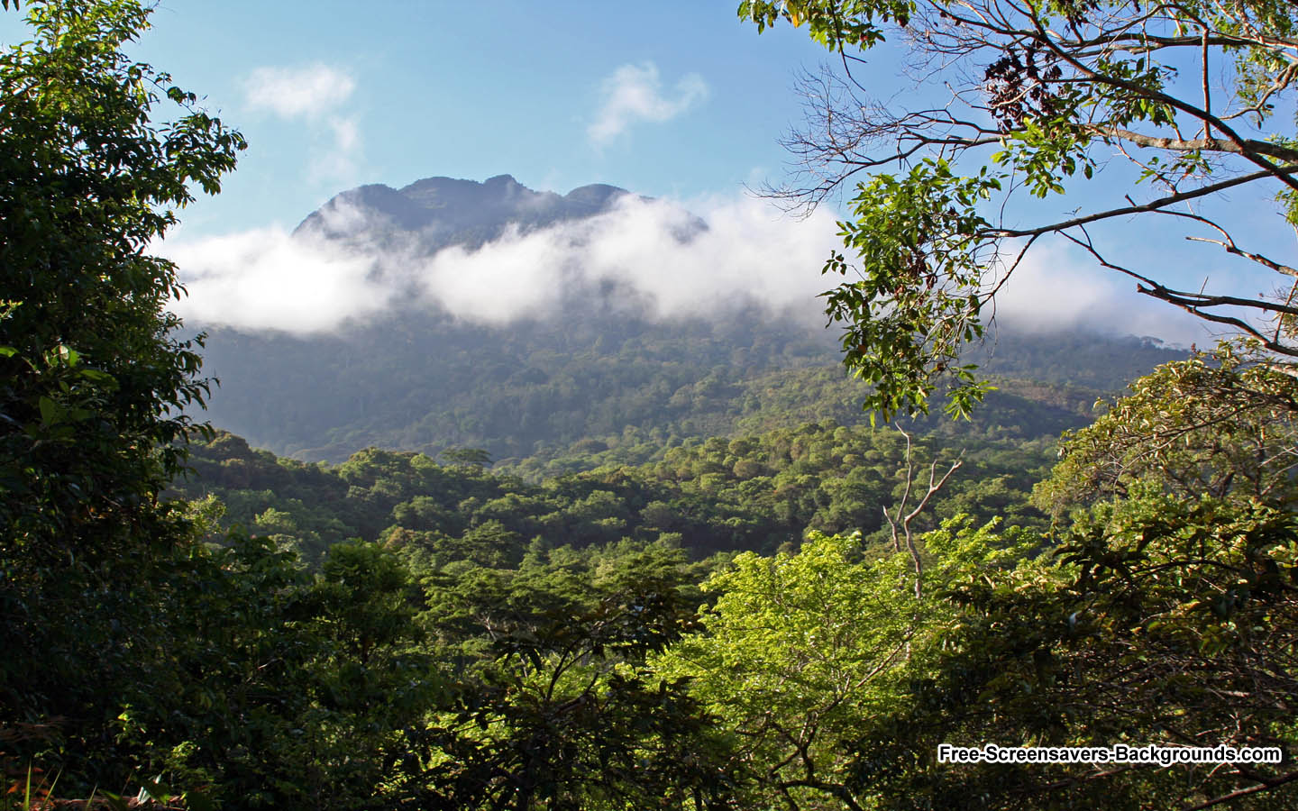 Udzungwa Mountains Wallpaper   Screensavers and Backgrounds 1440x900