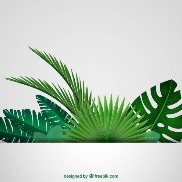 Palm Tree Vectors Photos and PSD files Download 626x626