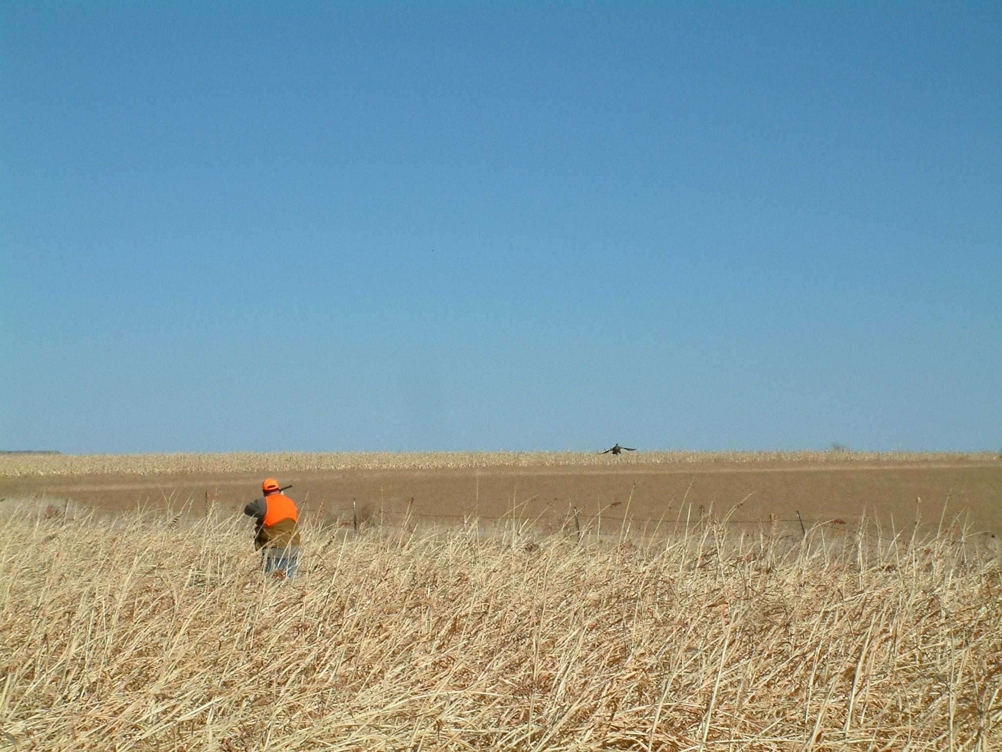Pheasant Hunting Wallpaper