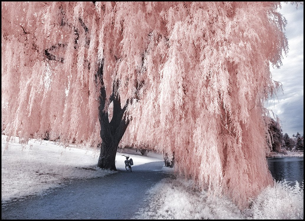 Willow Tree Contest WINNERS by Trees With character 1034x751