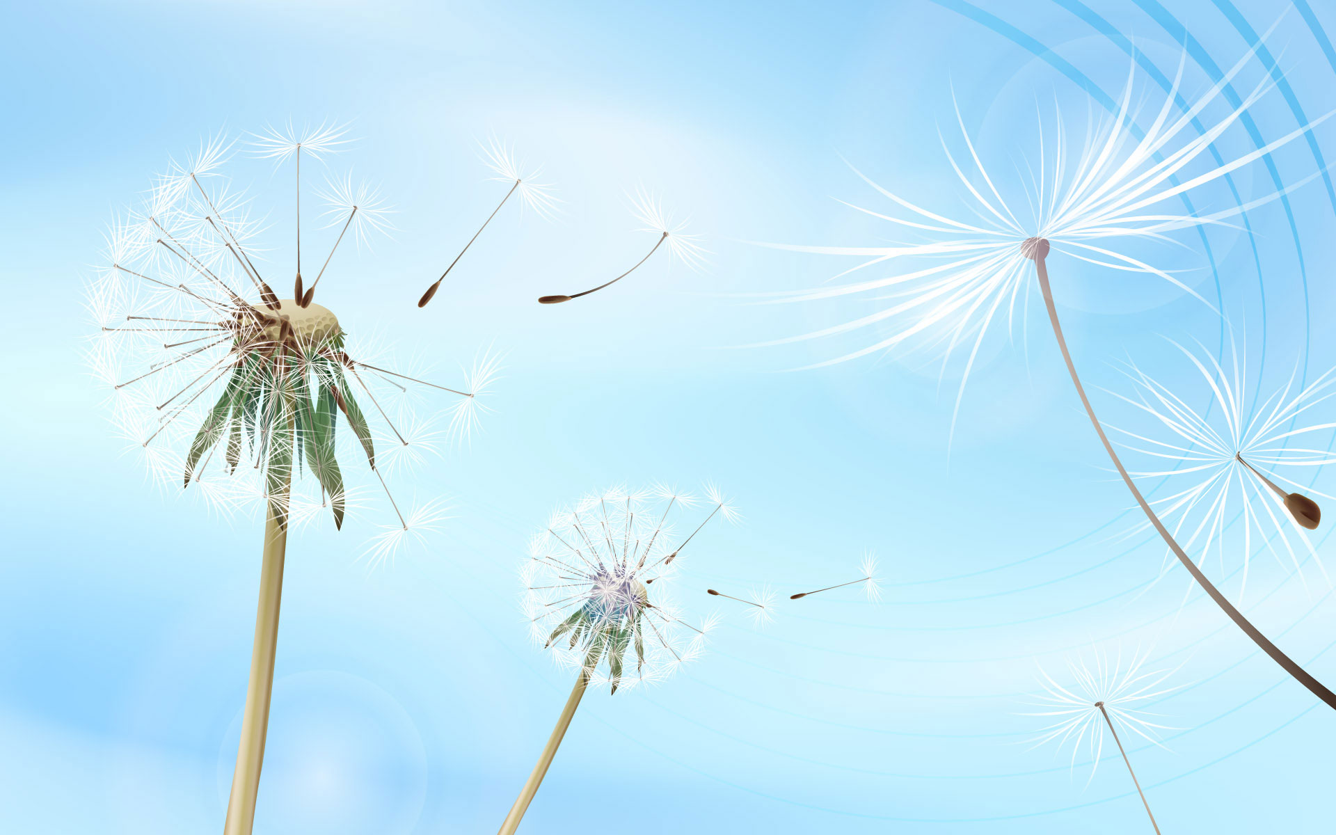 Dandelion flying desktop wallpaper Desktop Background Scenery 1920x1200