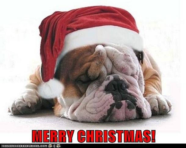 46+] Christmas Bulldog Wallpaper on WallpaperSafari