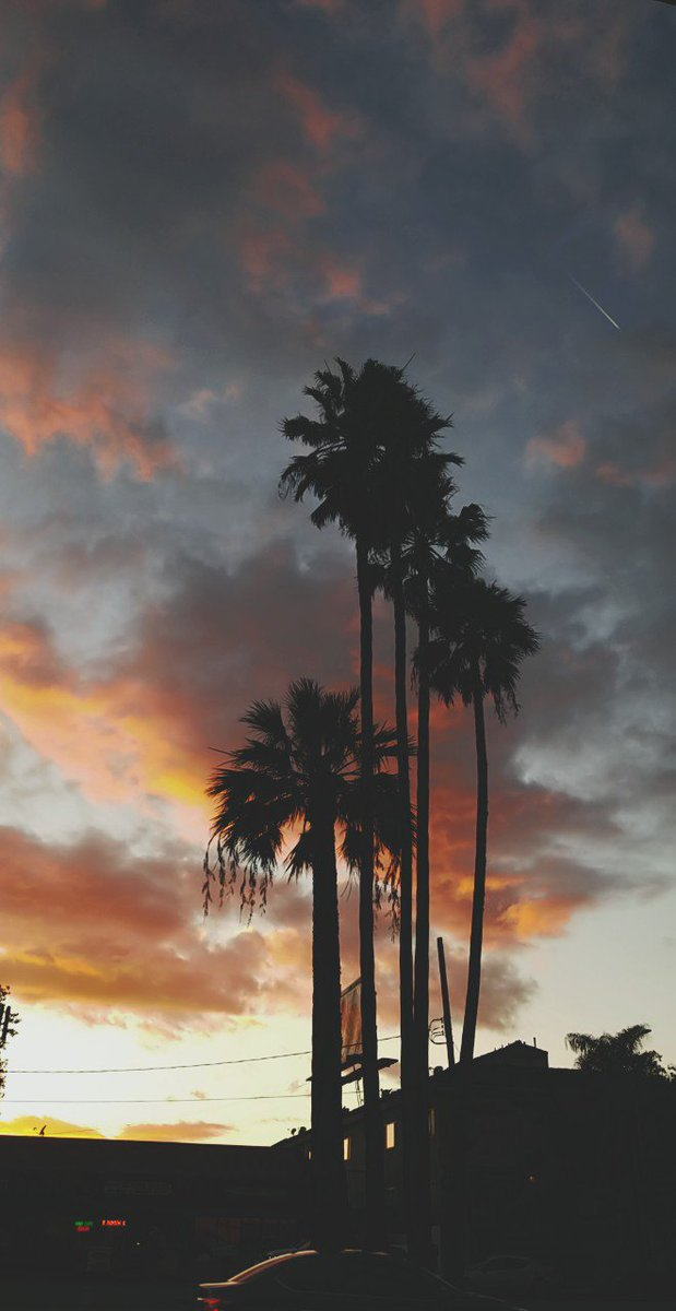 Free Download Guys I Did California Tumblr Wallpaper Aesthetic Today Borassus 619x1200 For Your Desktop Mobile Tablet Explore 36 Aesthetic Tumblr Wallpaper Aesthetic Tumblr Wallpaper Tumblr Aesthetic Wallpaper Aesthetic Wallpaper