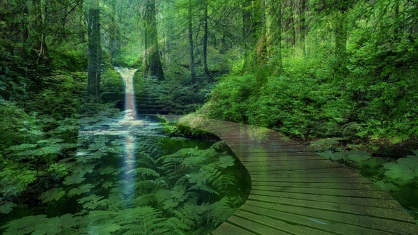 peaceful natural 1920x1080 wallpaper Plants Wallpapers Desktop 600x337