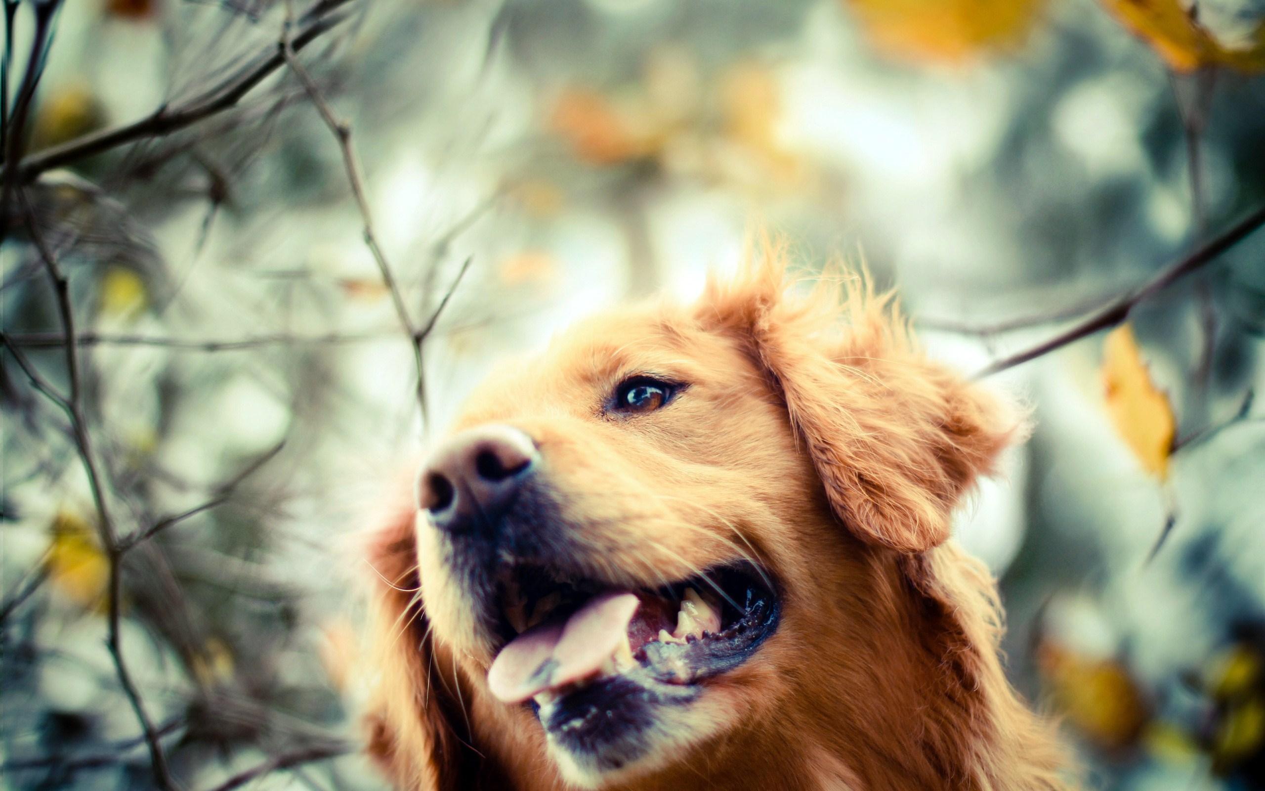 Dog Fall 2560x1600