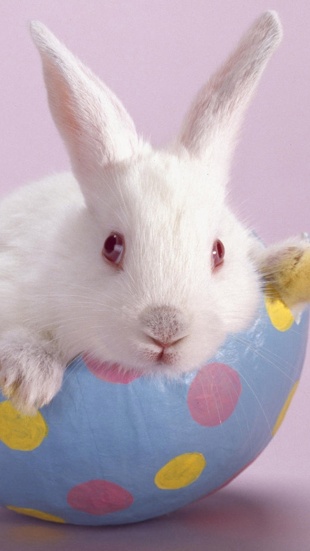 Download Cute Easter Bunny iPhone 5 HD Wallpapers 640x1136