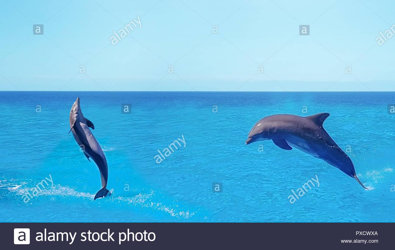 Dolphins swimmingjumping on blue ocean cloudmarine wildlife 1300x821