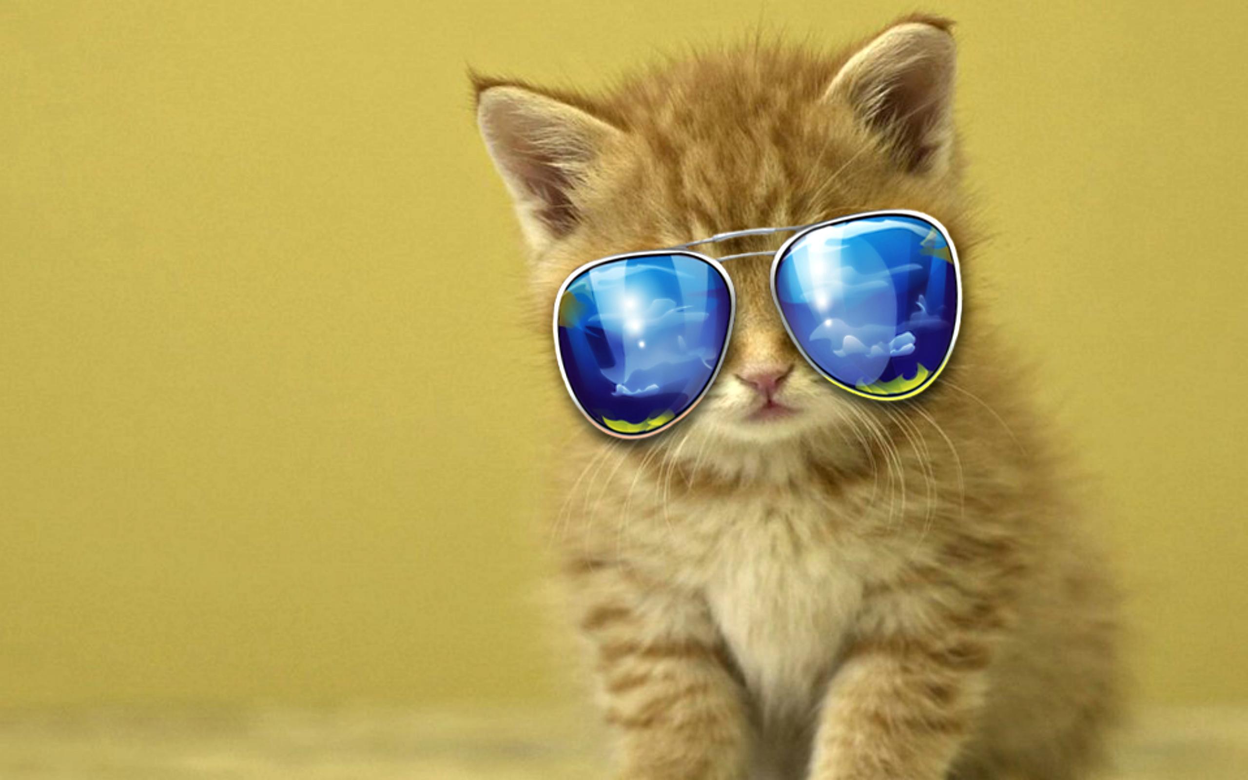Kitten with sunglasses HD Latest Wallpaper HD Latest Wallpapers 2560x1600