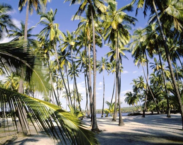 Palm Trees On Beach Wall Art   Tropical   Wallpaper   by Murals Your 640x508