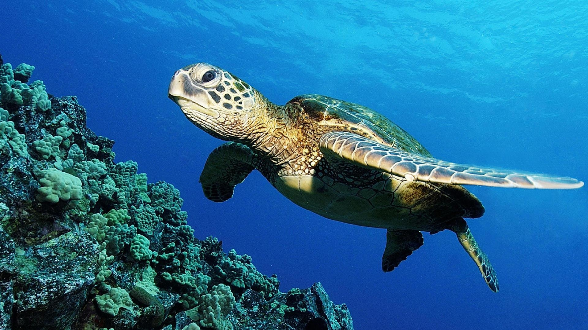 Turtle Backgrounds Download 1920x1080
