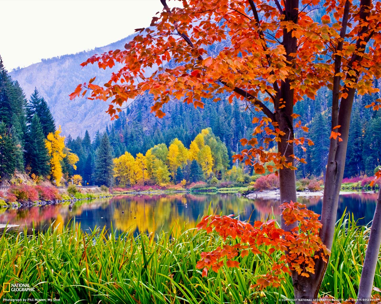 Fall Foliage Washington 1280x1024