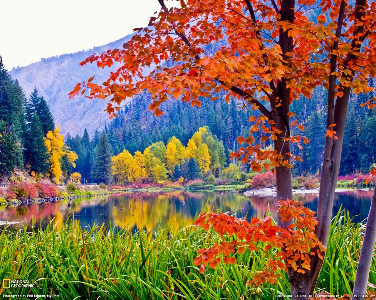 Fall Foliage Washington 1280x1024