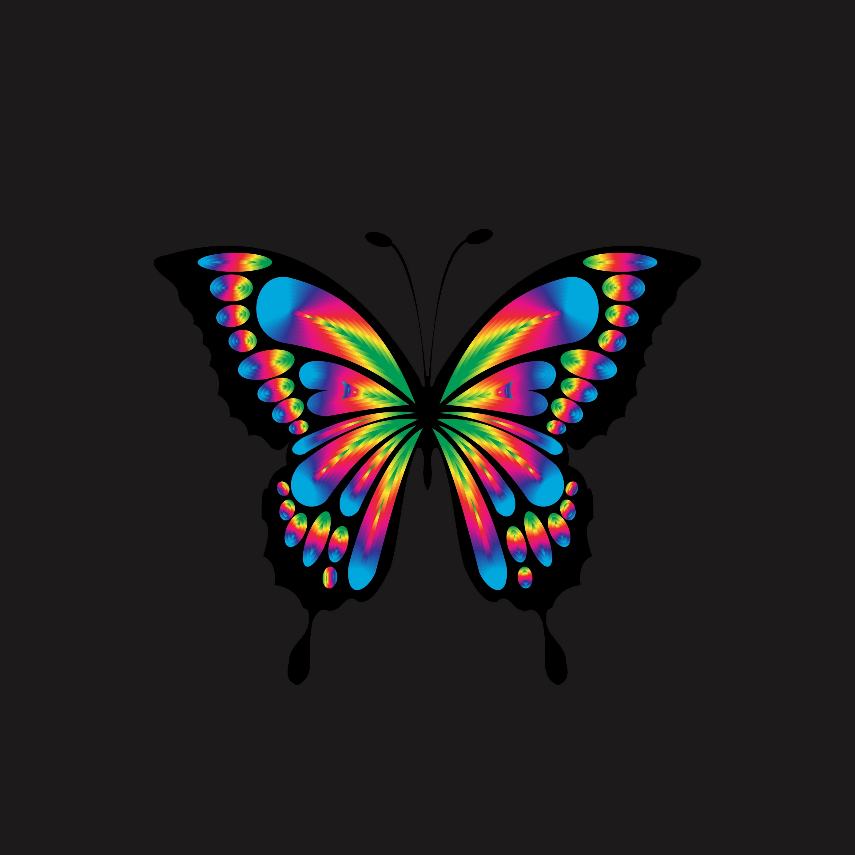 Download wallpaper 2780x2780 butterfly shine bright 2780x2780