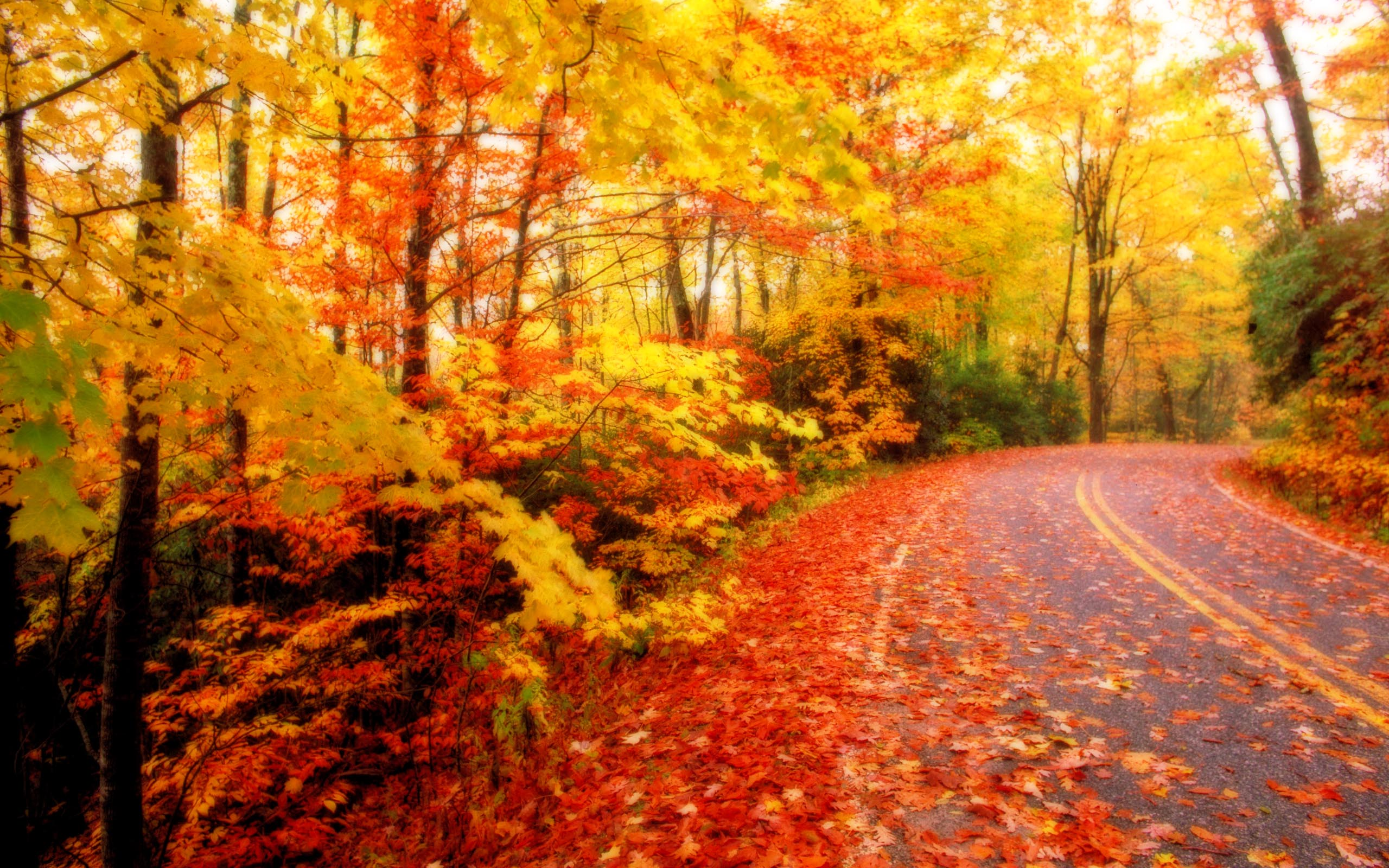 Autumn Leaves Desktop Wallpapers for HD Widescreen and Mobile 2560x1600