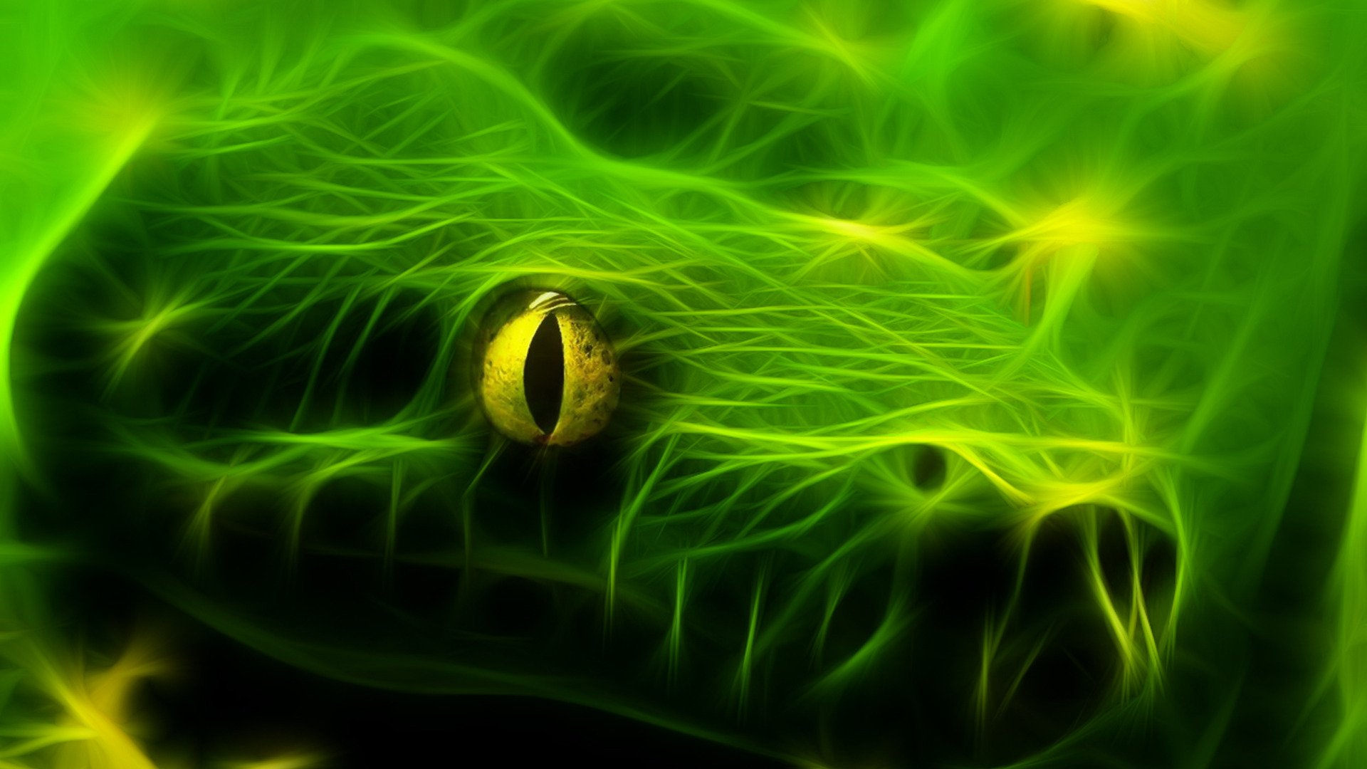 Green Snake Wallpaper  WallpaperSafari