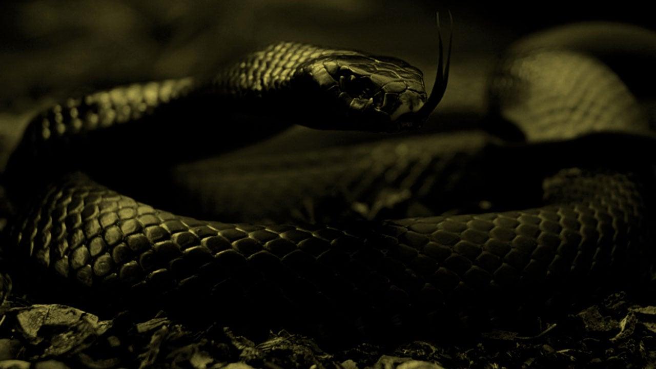 Black Mamba Snake Wallpaper - WallpaperSafari