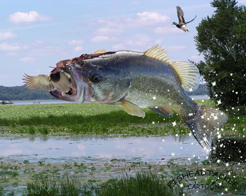 Largemouth Bass Wallpaper HD - WallpaperSafari