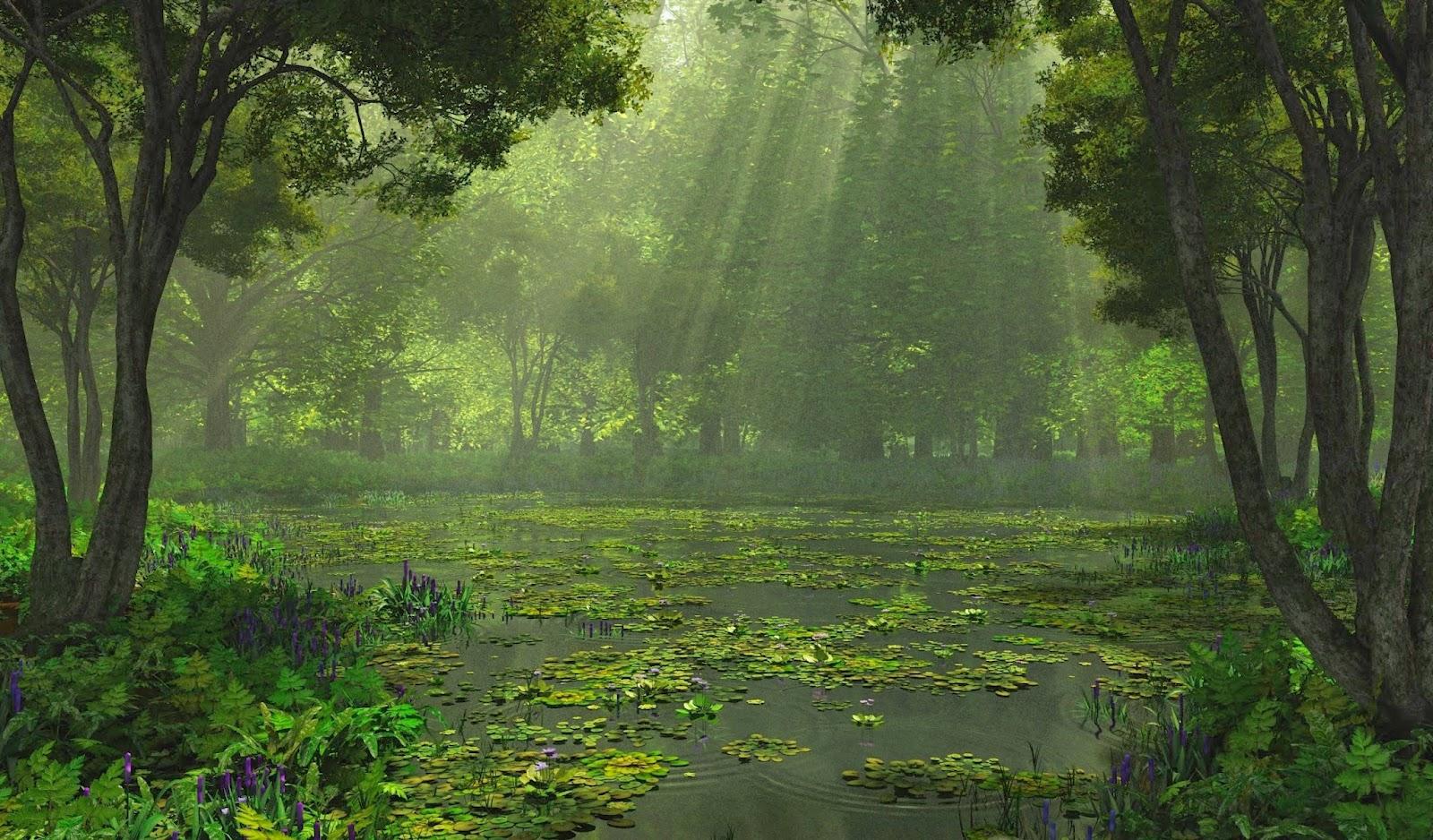 Rain Beautiful Nature Wallpaper | Picture Gallery