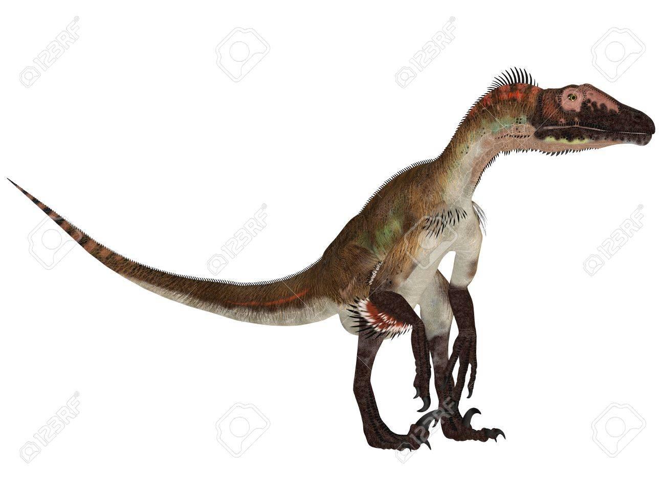 Illustration Of An Utahraptor Dinosaur Species Isolated On Stock 1300x968