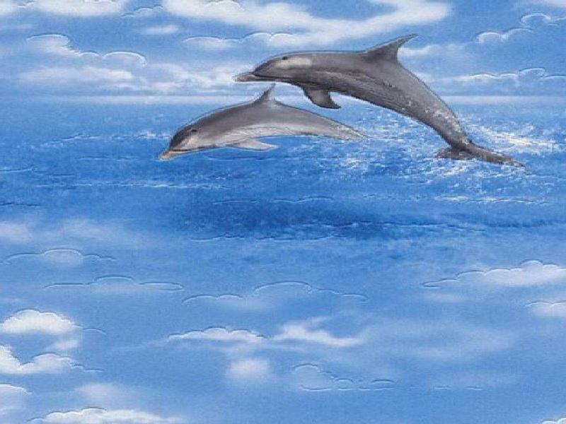 BathroomWaterproof Wallpaper For Bathrooms Dolphin Waterproof 800x600