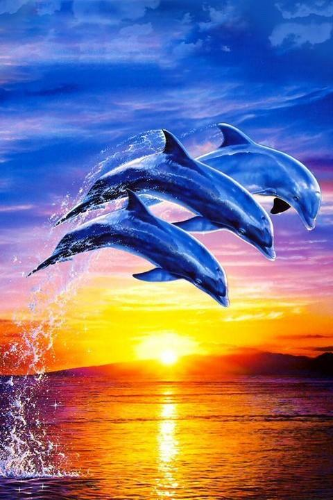 Dolphin Wallpaper 3D FREE   Android Apps on Google Play 480x720