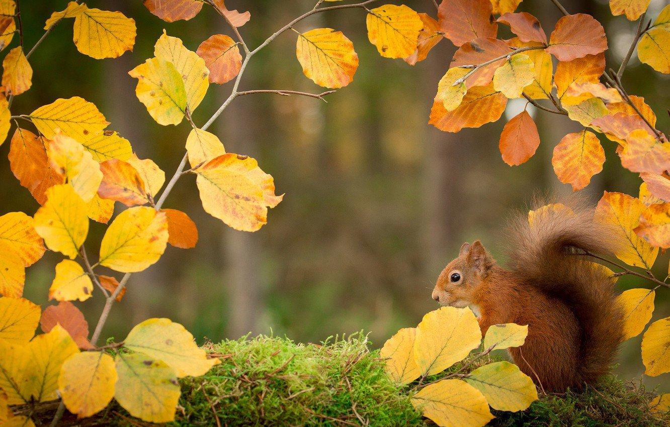 Wallpaper autumn leaves branches nature protein images for 1332x850