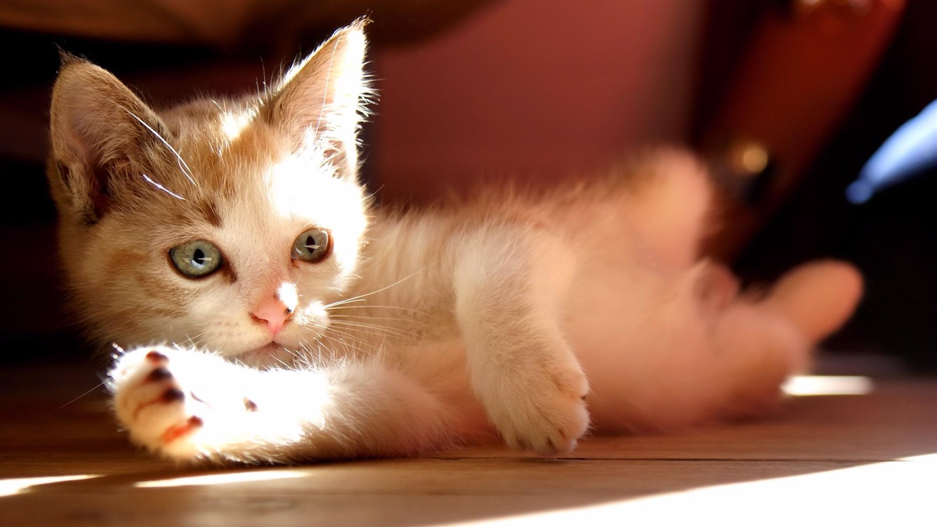 Cute Kitten Wallpaper Desktop Cat 1920 1080jpg 1920x1080