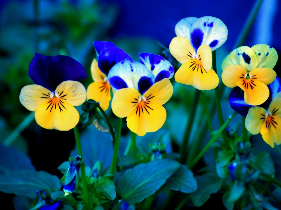 1152x864 Spring Flowers desktop PC and Mac wallpaper 1152x864