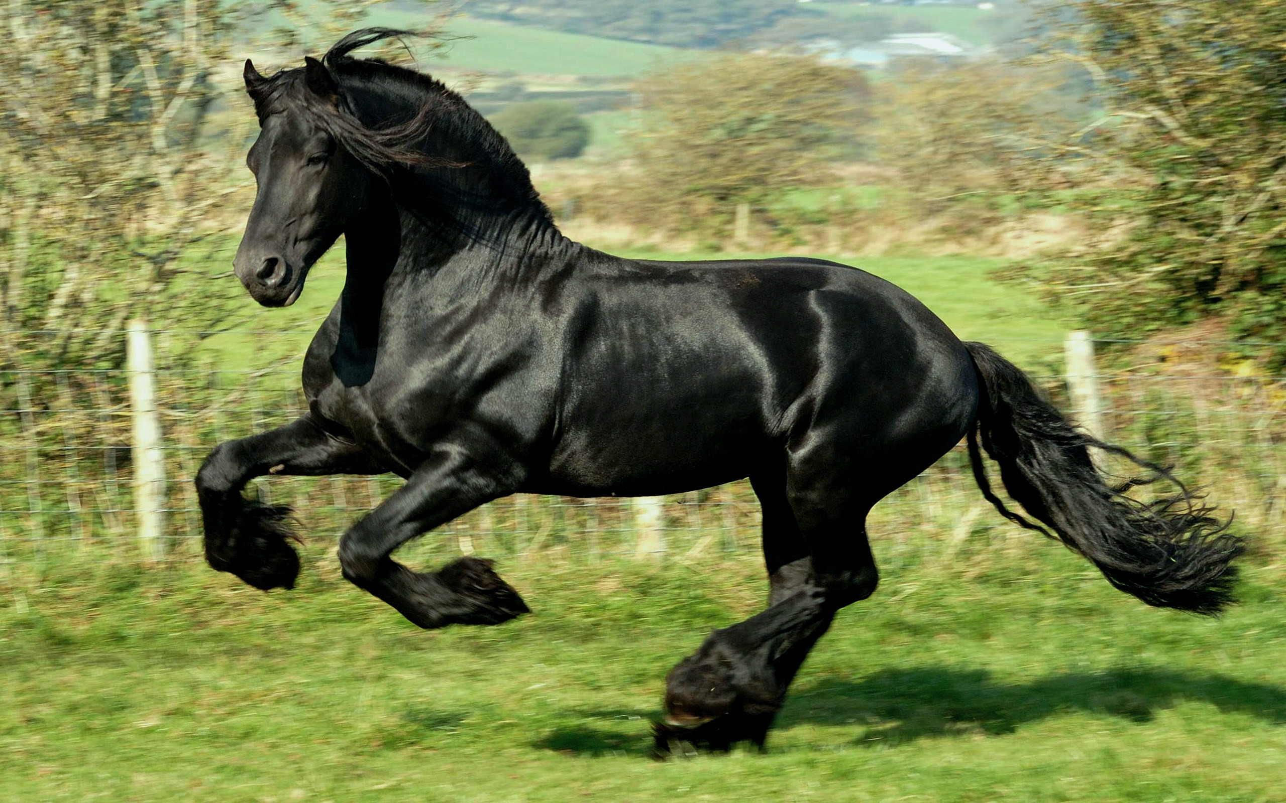 Wallpaper Beauty Black Horse 2560x1600 Wallpapers 3d For Desktop