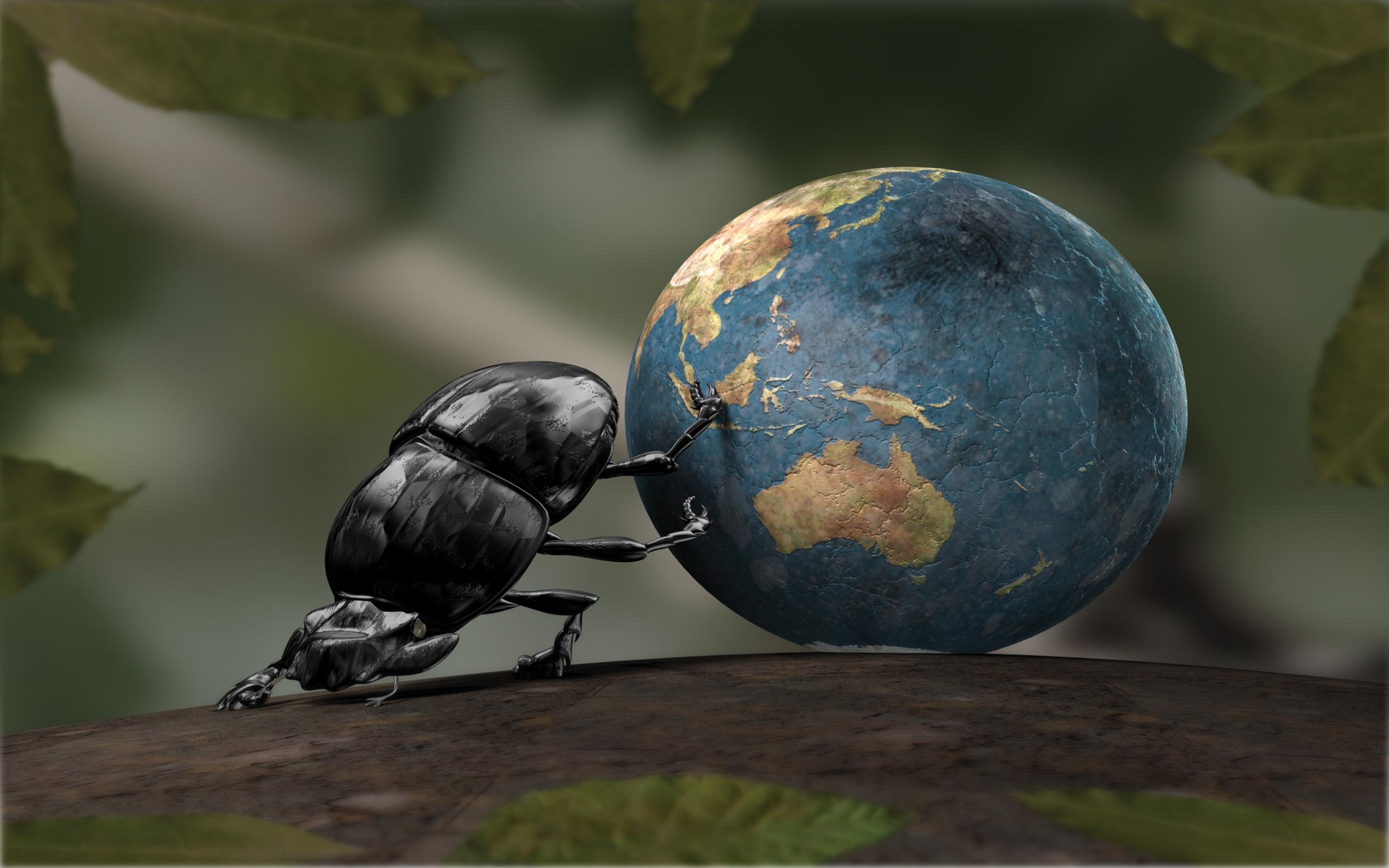 Dung beetle Mac Wallpaper Download Mac Wallpapers Download 2560x1600
