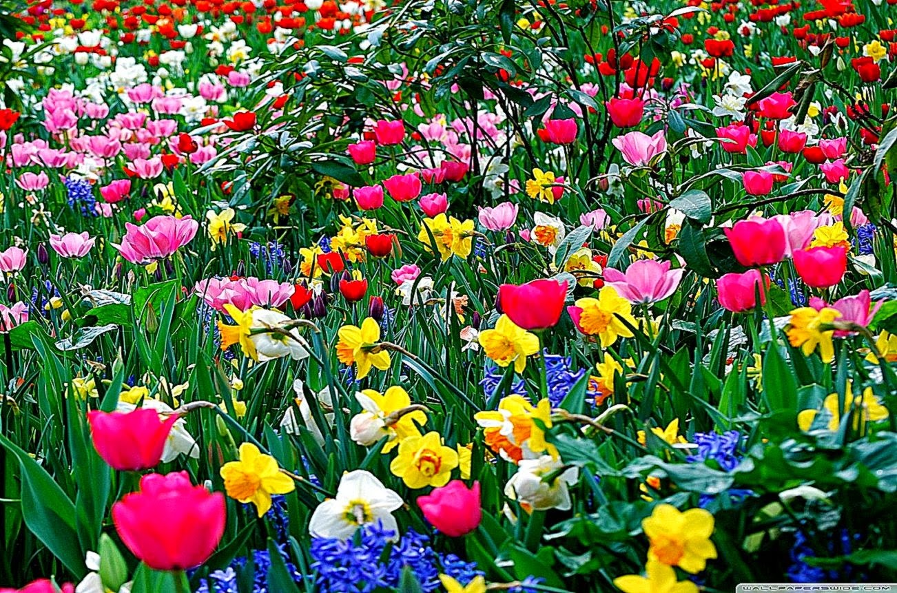 Flowers wallpapers high definition wallpapers high definition - Spring Flowers Hd Desktop Wallpaper High Definition Fullscreen