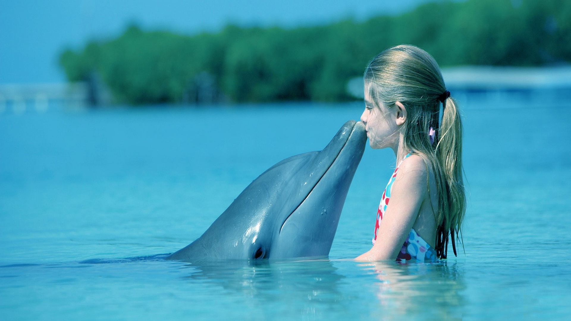 Dolphin Wallpapers HD 1920x1080