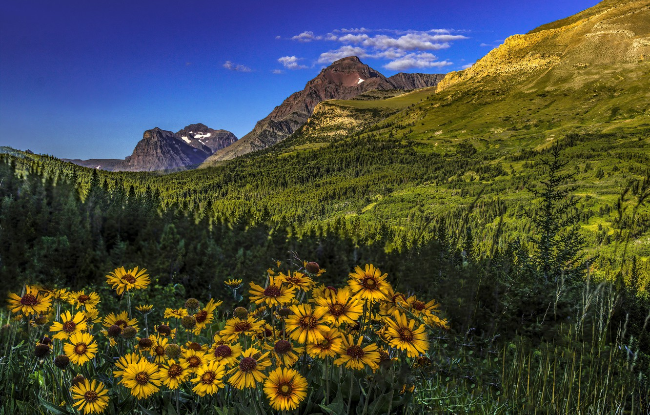 Wallpaper forest flowers mountains valley Montana Glacier 1332x850