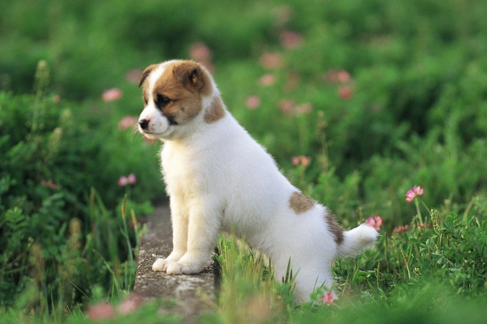 Dog Wallpaper Claws Cute Dog Images HD Wallpapers Desktop 1697x1128