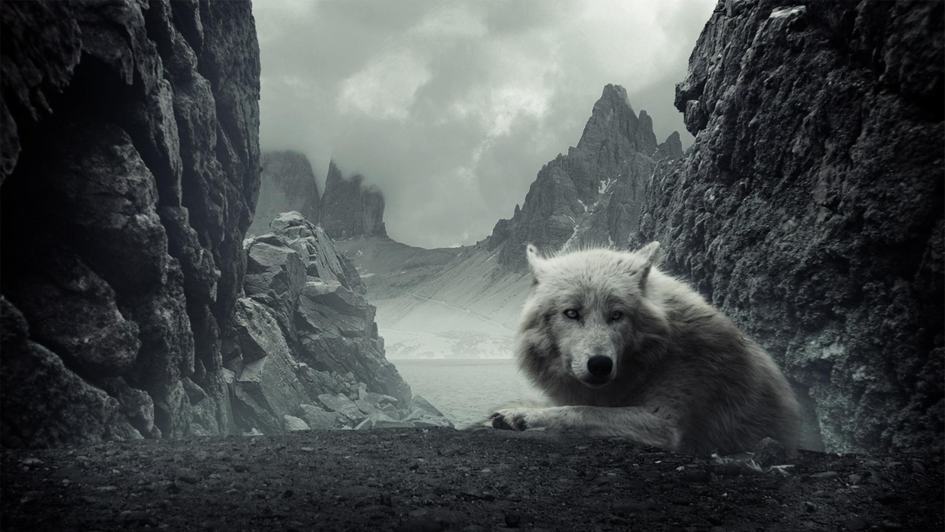 Wolf Wolves HD Wallpaper 2675 1920x1080