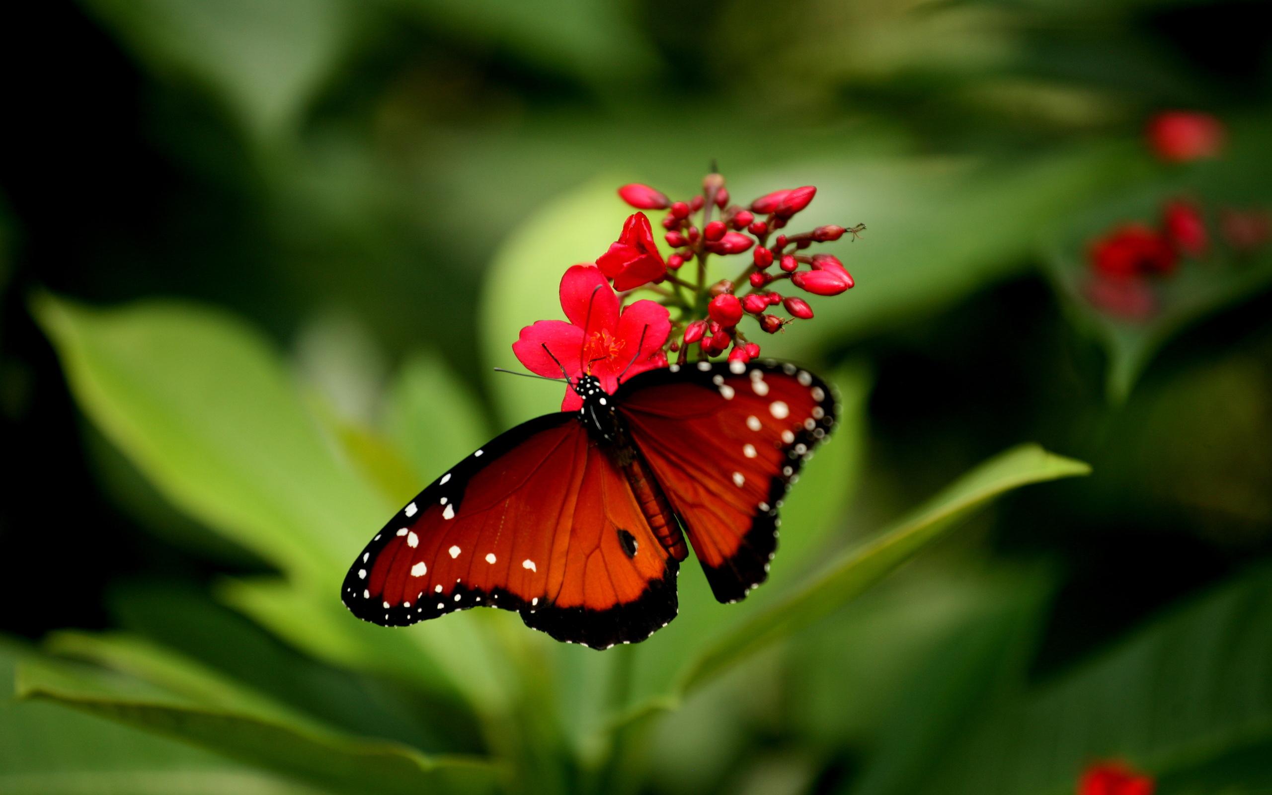 Обои для рабочего стола высокого качества бабочки