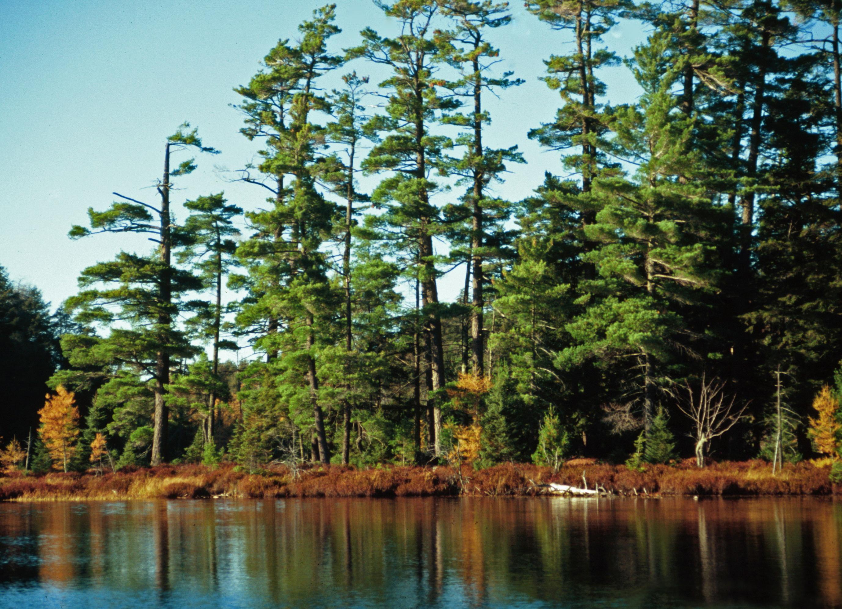 Sylvania Wilderness   Wikipedia 2757x1995