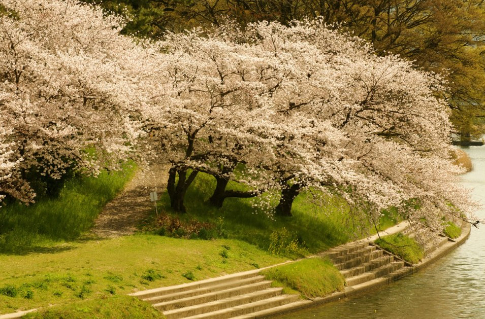 Awesome Spring Wallpaper Widescreen 955x629