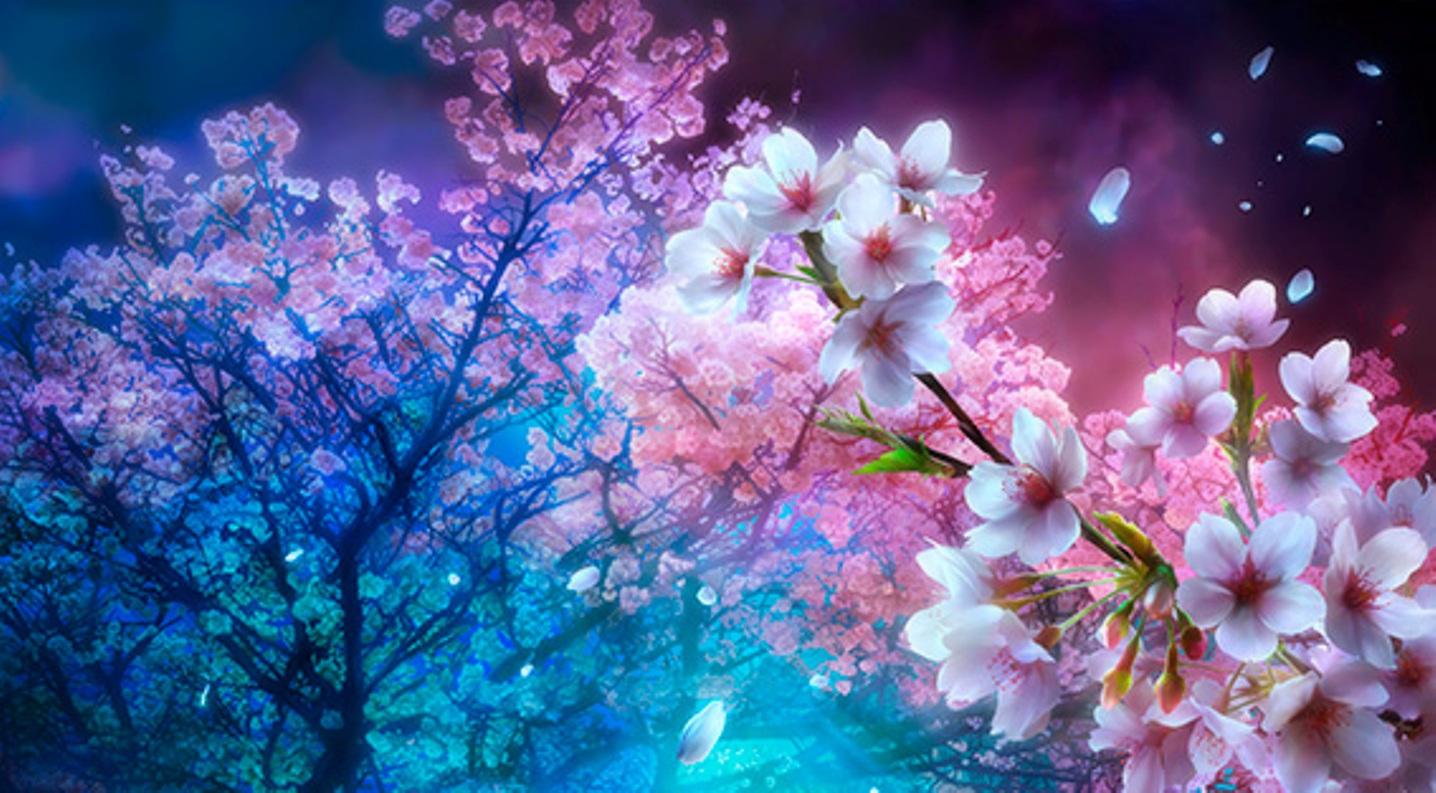 anime cherry blossom wallpaper wallpapersafari. Black Bedroom Furniture Sets. Home Design Ideas