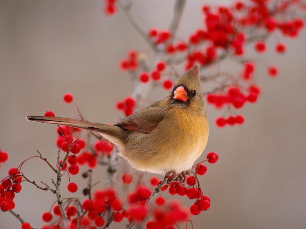 Animals Zoo Park Birds Desktop Wallpapers Bird Beautiful 1024x768