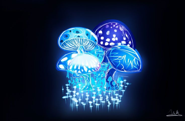 trippy mushroom wallpapers