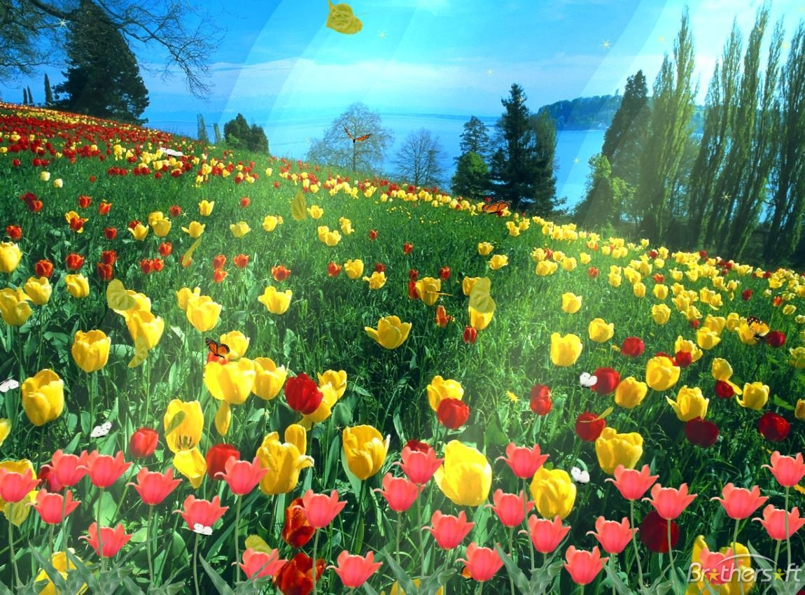 Nature Animated Screensavers Free Download