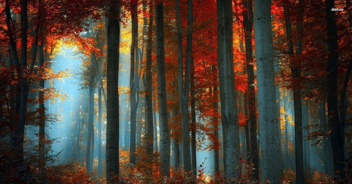 Fall Desktop Wallpaper   EnJpg 1200x630
