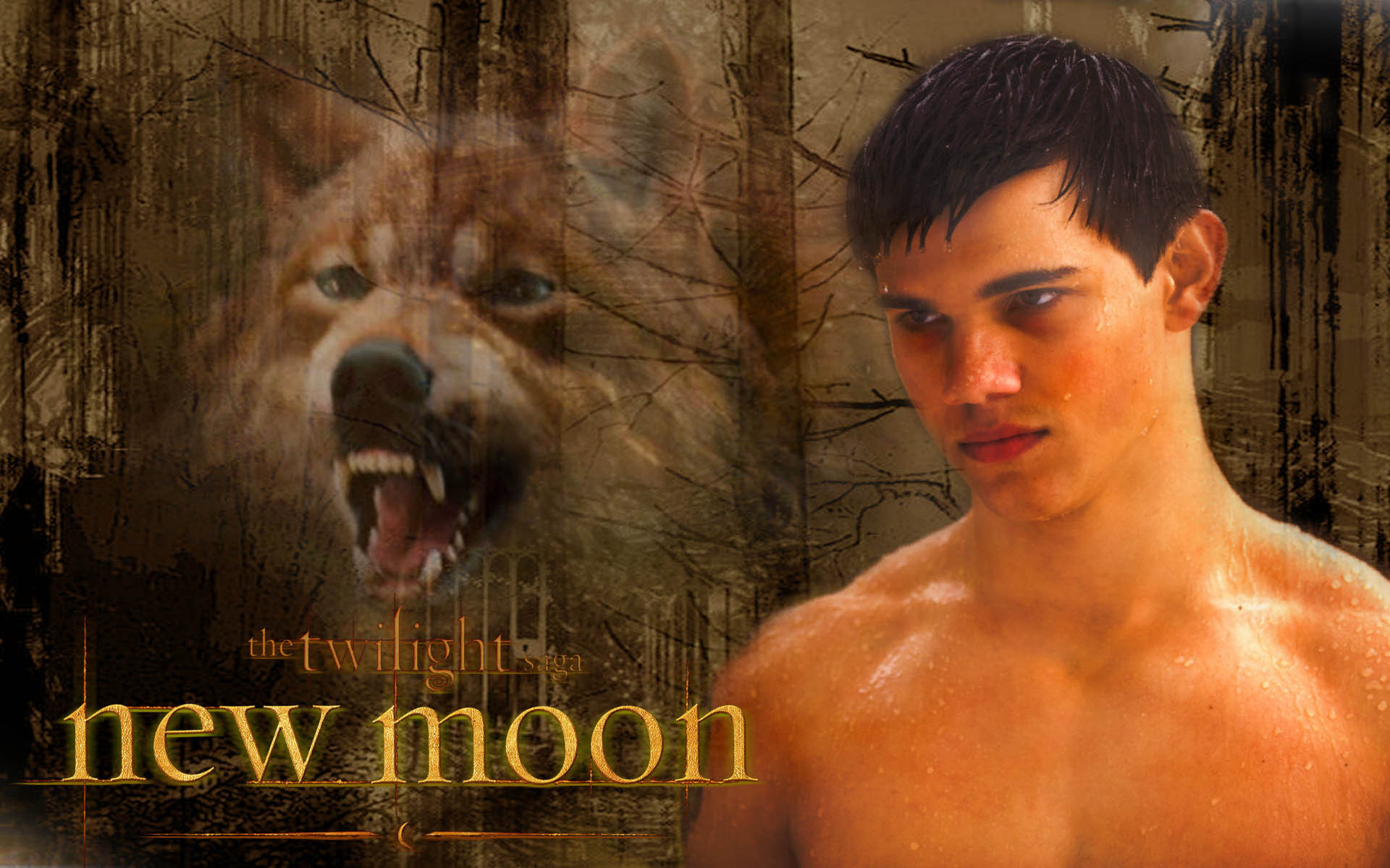 jacob Blac New Moon   Jacob Black Wallpaper 7270404 1920x1200