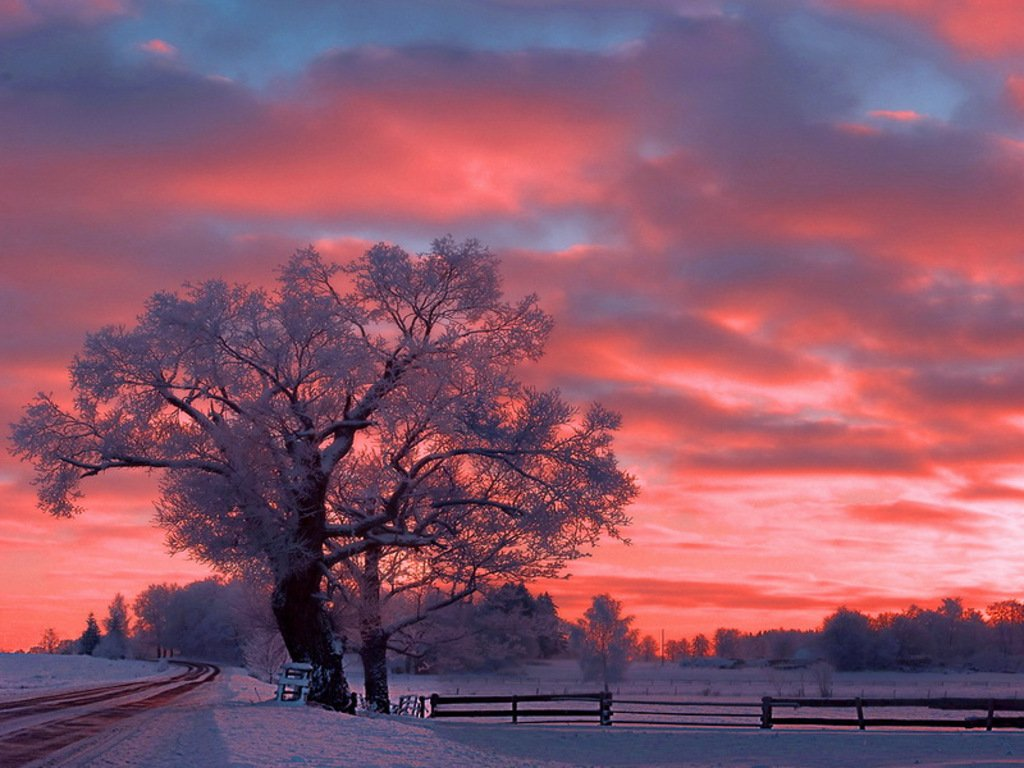 winter sunset sky snow tree color nature hd wallpaper 1310863 1024x768